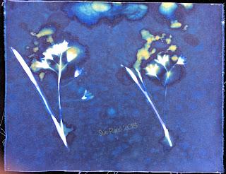 Wet Cyanotype_Sue Reno_Image 304