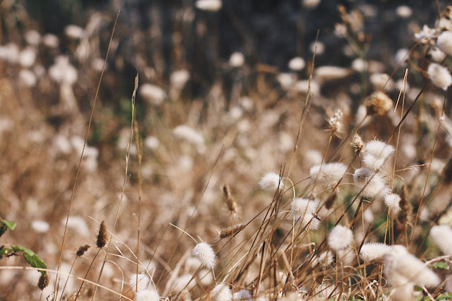 photographie nature bassin arcachon landes aquitaine