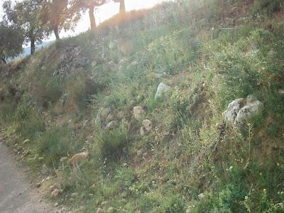 La pileta, camino, pantano de Pena, embalse, finca, almendros, olivos 29