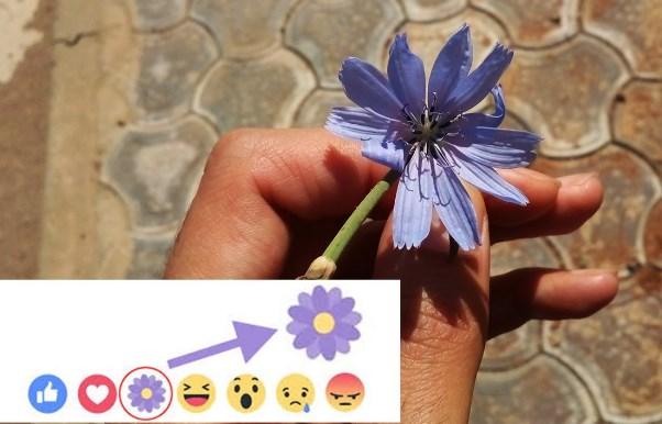 Facebook Flower Reaction