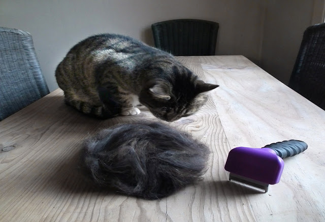 Cat Shedding