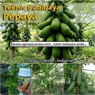 agen-nasa-di-tanjung-mutiara-agam-082334020868