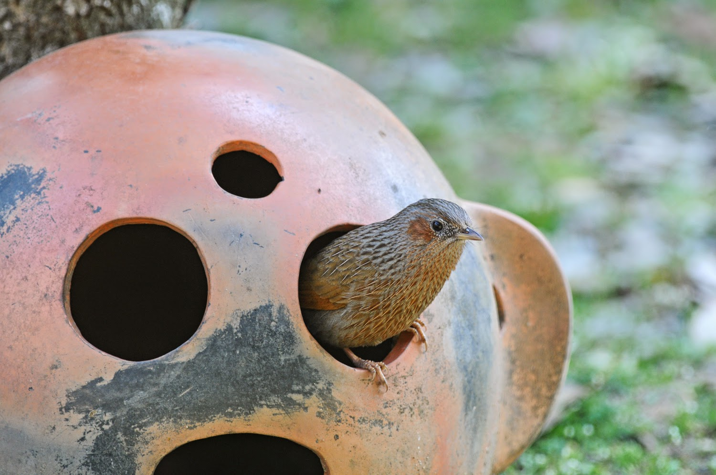Zoothera Birding Blog  March 2015
