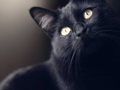 black-cat-image