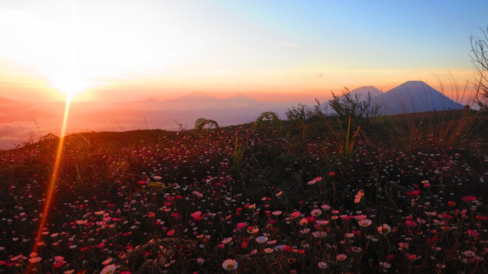 Gunung Prau Dieng: Tempat Paling Indah Dan Romantis Untuk Menikmati Sunrise paling indah saran perjalanan wisata