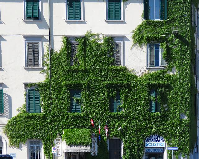 Creepers and windows, Piazza della Repubblica, Livorno