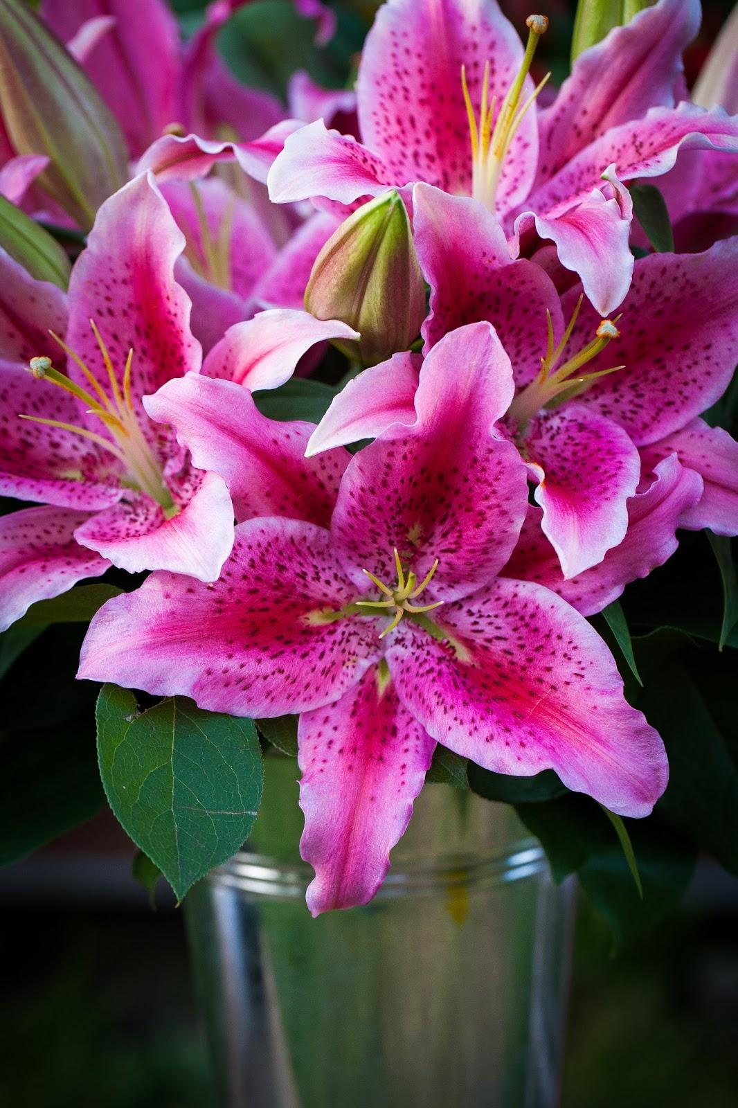 Aromatherapy and oriental lilies flower talk dynamite oriental lily izmirmasajfo