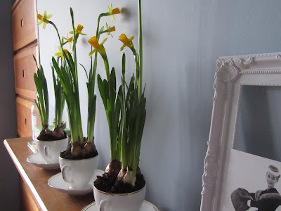 daffodils and teacups http://snadralovesblogging.blogspot.co.uk/