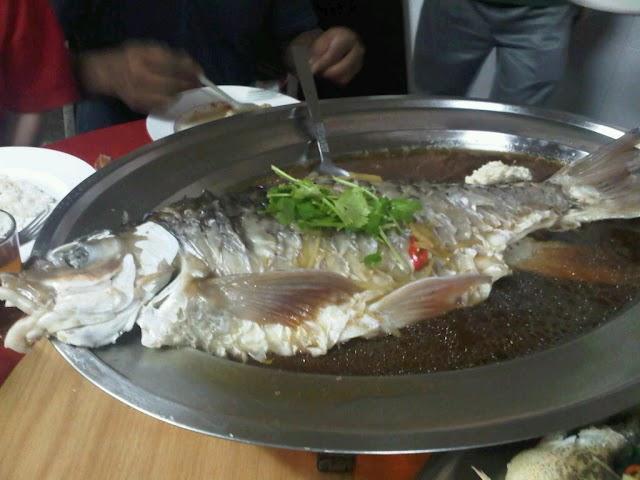 Ikan Kelah Masak Stim Cecah RM1,000 di Taman Negara Kuala Tahan