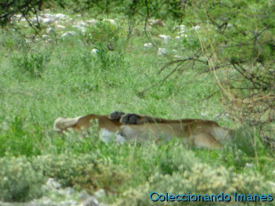 Etosha Animales Namibia Safari