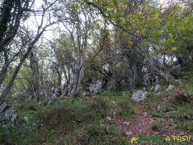 Sendero hacia la Xamoca entre bosque