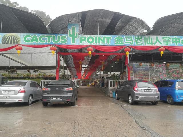 Apa Ada Di Cactus Point, Cameron Highland | Tempat Menarik Di Cameron Highland
