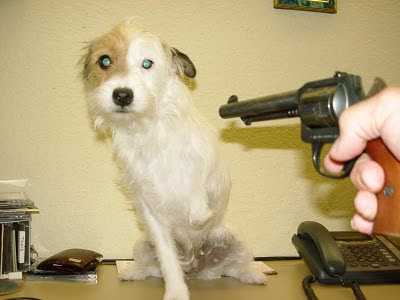 New Testament Christian Church No Pet Rule Now Called A Policy - Dog Cringes in Fear before a Revolver / Handgun