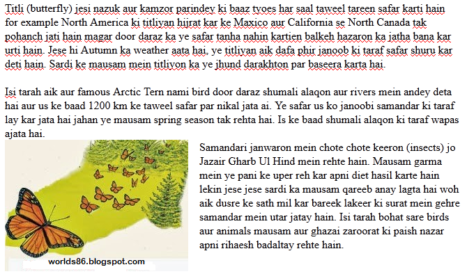 Short essay on butterfly for kids