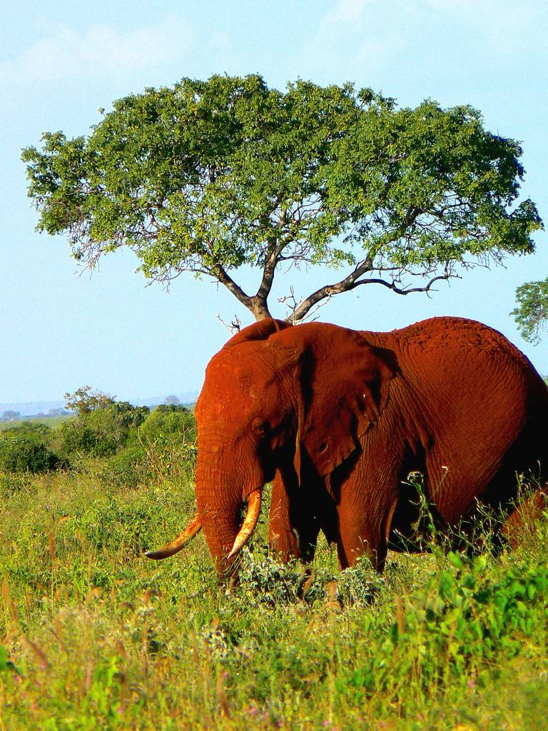 the red elephants of kenya the ark in space