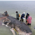 Unbelievable Items Found In The Stomach Of A Dead Whale Washed Ashore
