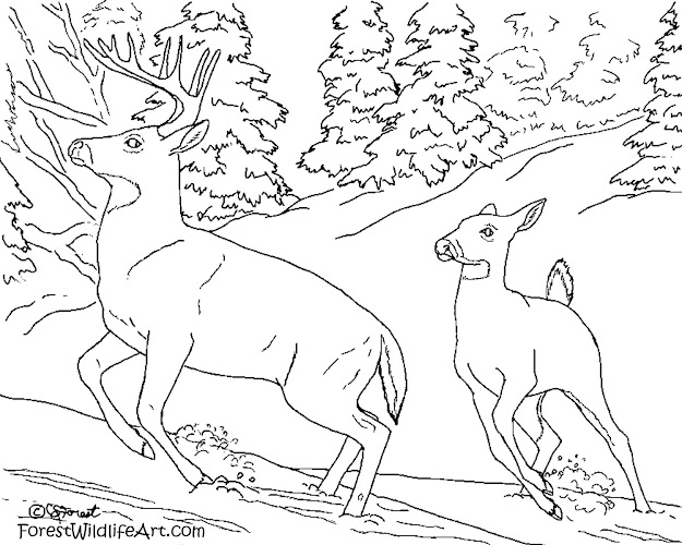 Coloring Page For Kids Deer Doe Buck Snow