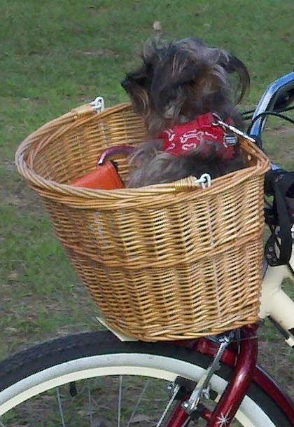 dog riding bicycle by http://dearmissmermaid.com