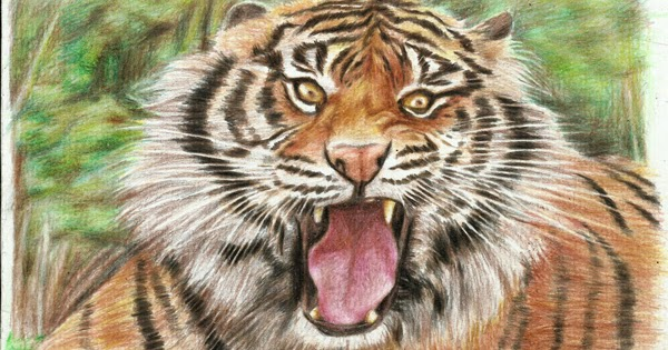Menggambar Harimau Sumatra Dengan Pensil Warna Teknik