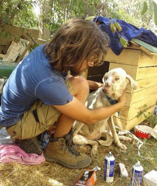 Deja un futuro prometedor, ahora rescata animales abandonados