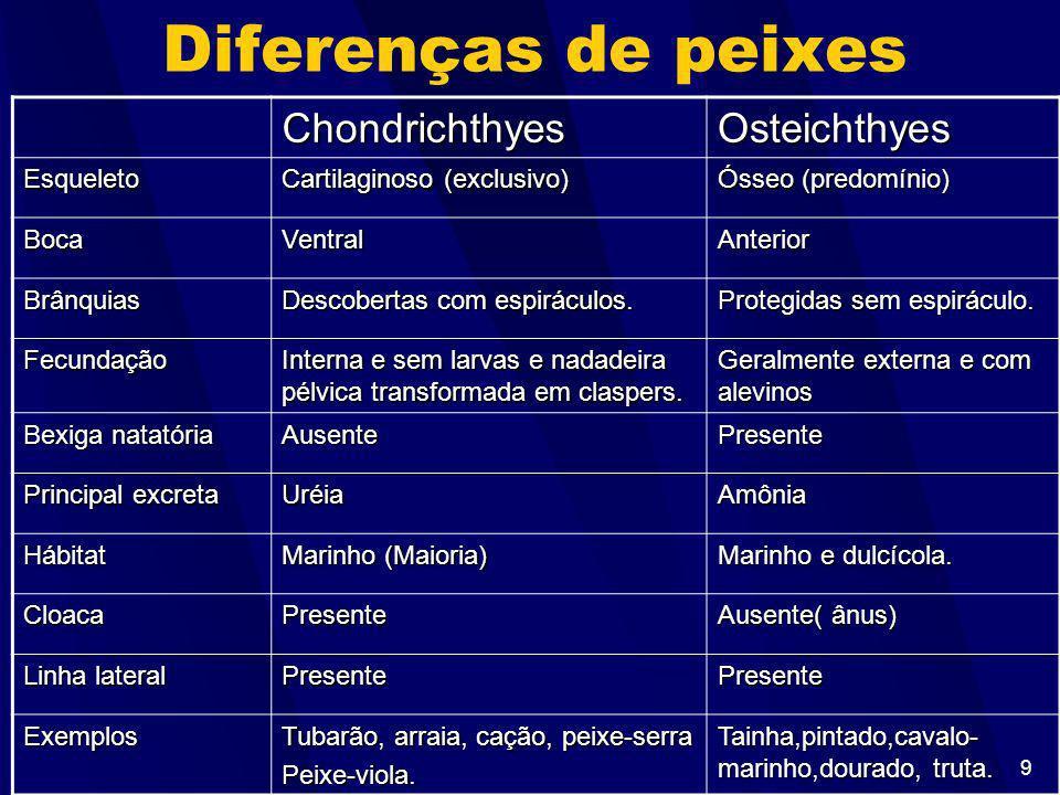 Diferenças Entre Peixes Osteichthyes e Chondrichthyes