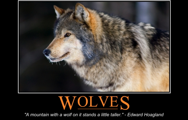 Hunter S Thompson Quote Wallpaper White Wolf Wolves Keep The Ecosystem In Balance