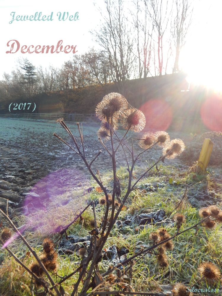 Sunlight on frosty and cobwebbed teasel heads - Jewelled Web December 2017 by SilverMoss Jewellery