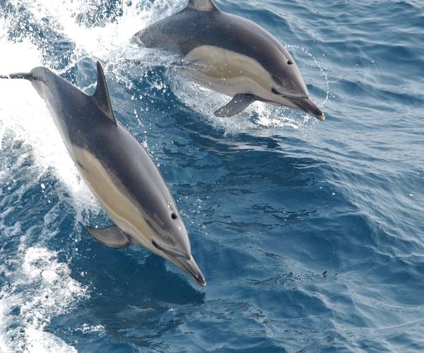 golfinhos-ecolocalização