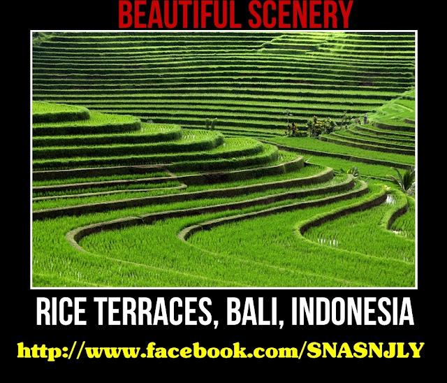 Rice Terraces, Bali, Indonesia,Beautiful scenery
