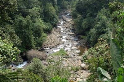 flora dan fauna di hutang petungkriyono