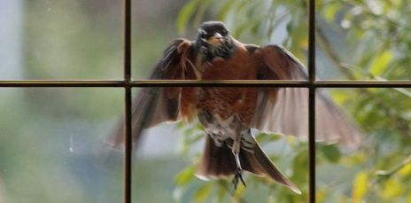Wild Birds Unlimited Some Tips To Deter Bird Window Attacks - Window stickers to deter birds