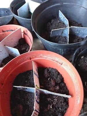 Riciclare tetra pack per seminare in semenzaio