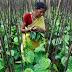Ινδία: Εκατοντάδες χιλιάδες εργάτες απεργούν για…40 σεντς παραπάνω την ημέρα!