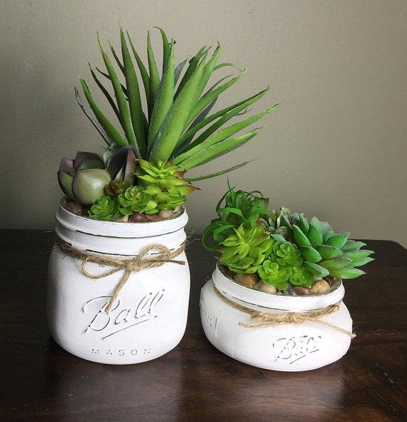 sukulen dan kaktus