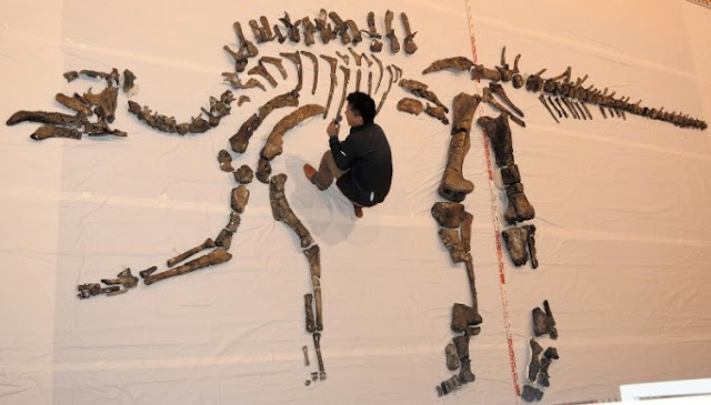 Largest fossilized dinosaur skeleton unearthed in Japan unveiled