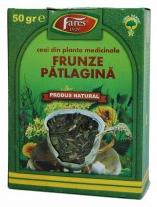 Ceaiul de patlagina – scapa de toxinele din sange