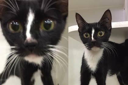 Gak BIASA! Kucing Ini Punya Kaki Yang Sangat Panjang!
