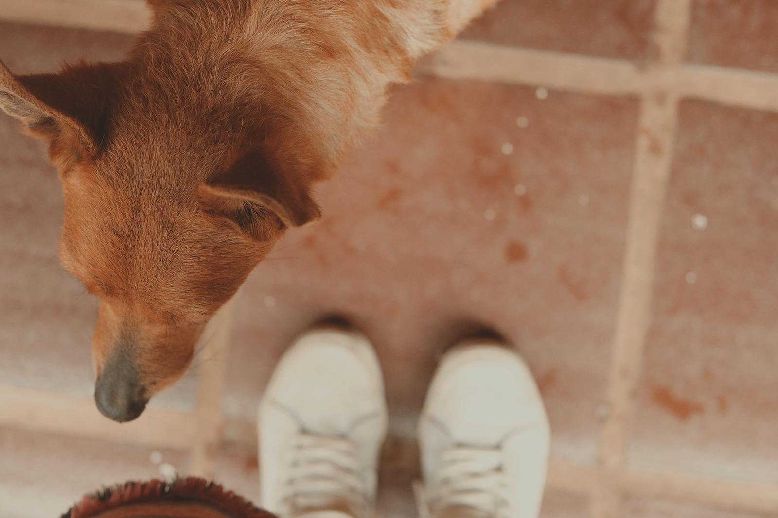 cachorro e seu dono