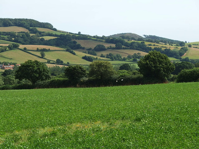 View of the Otter Valley at Newton Poppleford