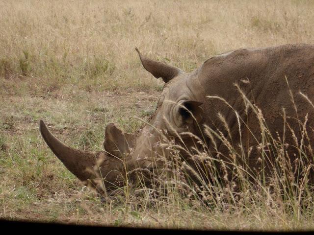 Nairobi National Park, rinoceronte negro