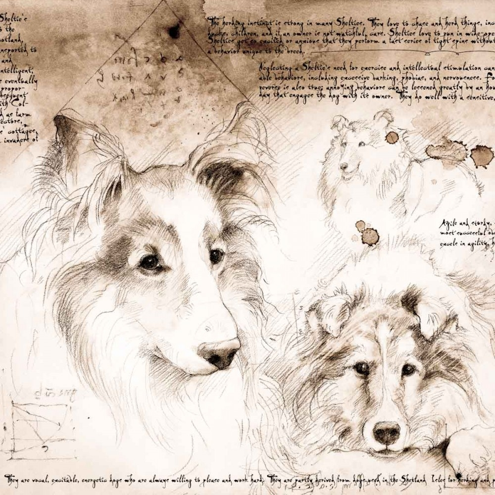 03-Sheltie-Study-Leonardo-s-Dogs-Cats-and-Dogs-Drawn-in-the-style-of-Leonardo-da-Vinci