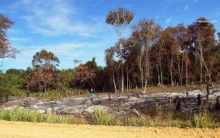 Desmatamento ilegal, perdão de desmatamento, IBAMA, Cadastro Ambiental Rural, CAR, desmatamento