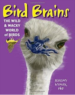 bird brains cover