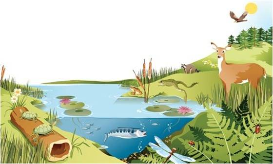ecosystem definition different types and examples plant science 4 u