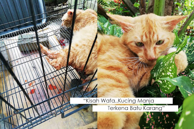Kisah Wafa : Kucing Manja Terkena Batu Karang