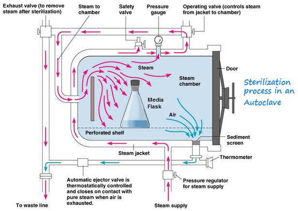 Sterilization flow chart