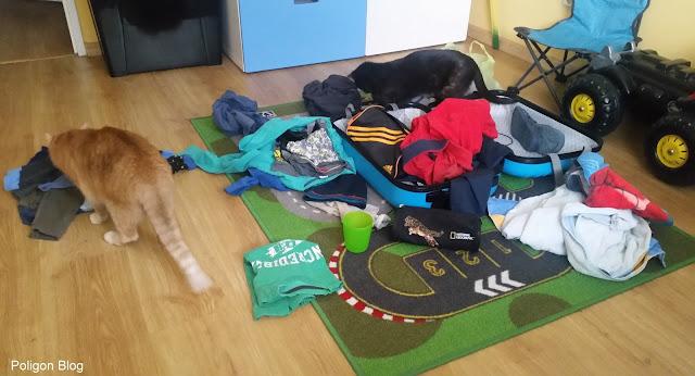 Koty, walizka, zielona szkoła