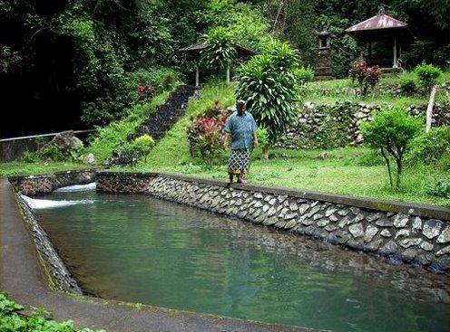 Subak: Traditional Balinese Wetland Irrigation System (irrigation)