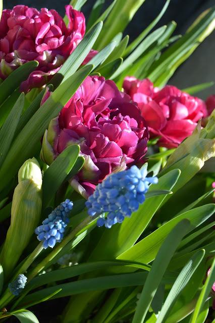 Tulipaner i krukke. Foto 4