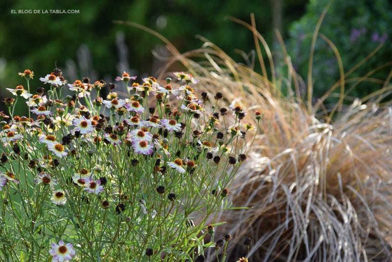 Coreopsis y Carex